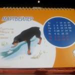 Выставка собак в Сокольниках, 27.03.2016