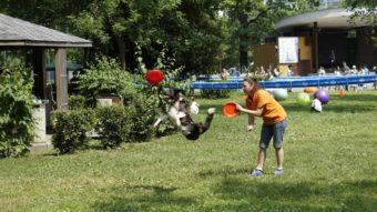 Третий московский фестиваль для собак и их владельцев «Собаки в городе»