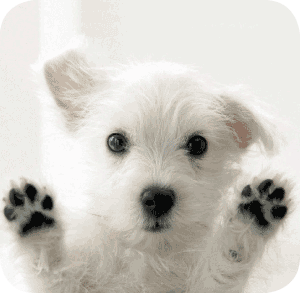 failed-donation-dog