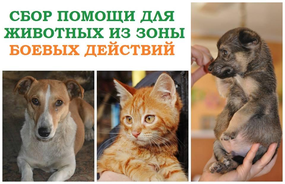 Заставка для - Сбор помощи для животных из ЛНР