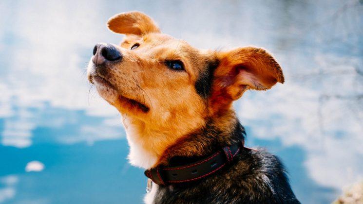 Собака Веста и ее хозяева.