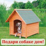 Заставка для - Подарки в честь Всемирного дня бездомных животных