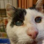 Заставка для - Слепой кот Вася, сбор на лечение
