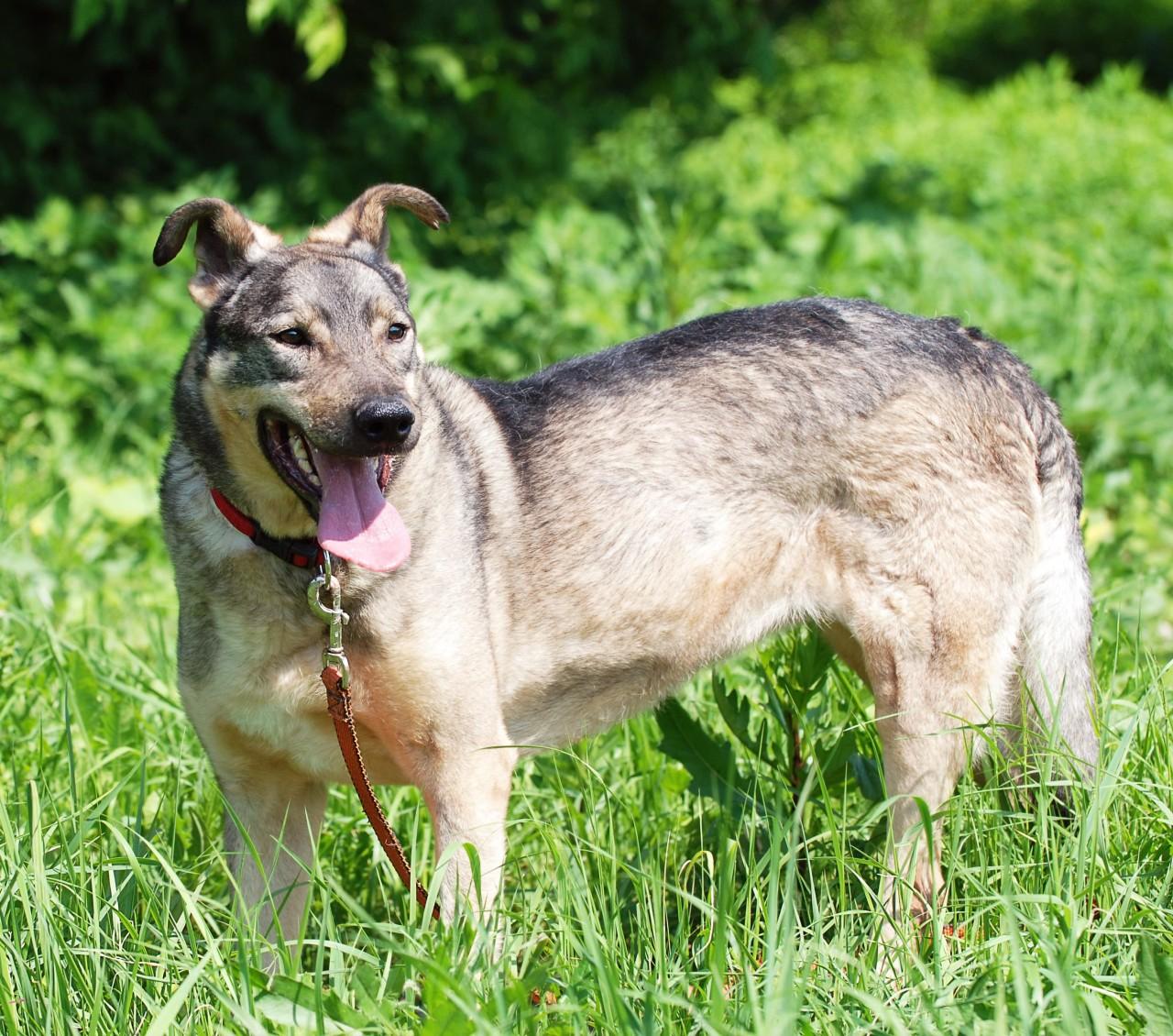 Заставка для - Собака Дана, сбор на лечение