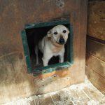 Заставка для - Собака Терри, сбор на лечение