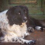 Заставка для - Собака Жужа, сбор на лечение