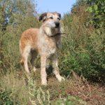 Заставка для - Собака Соня, сбор на лечение