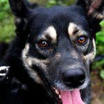 Заставка для - Собака Пафнуша, сбор на операцию