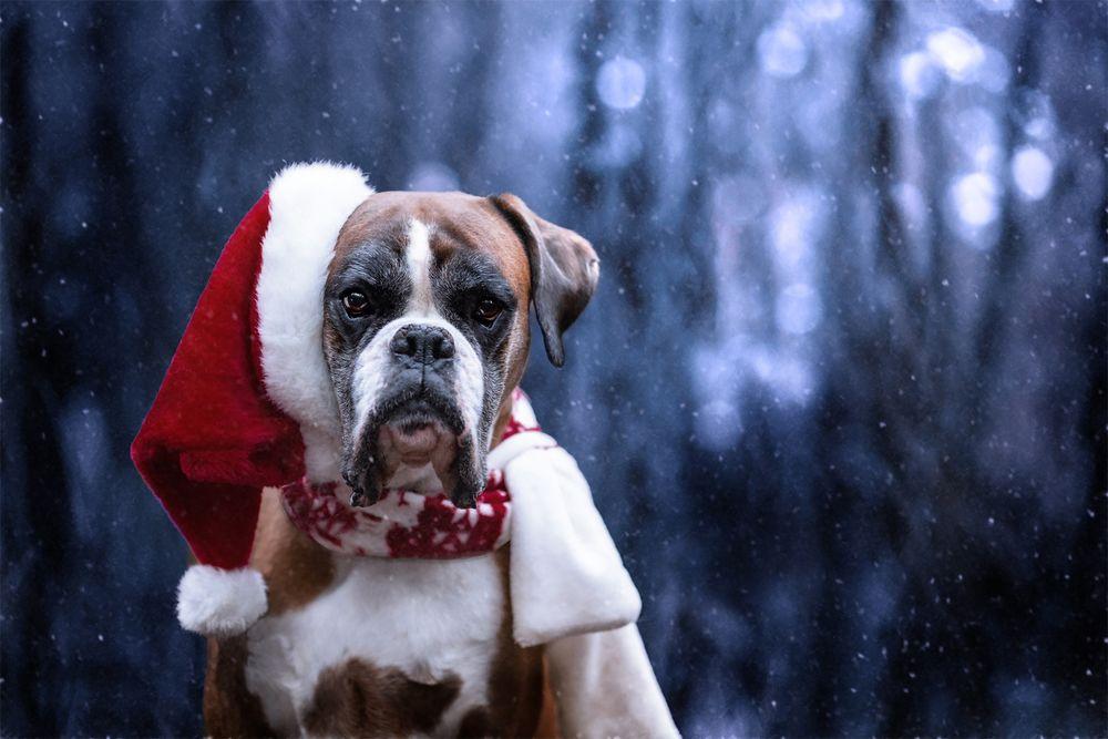 Заставка для - Подарок на новый год собакам и кошкам из приютов